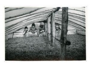 Nicolae, Lenuţa, Cuţa, Antonia inspecting greenhouse tomato plants