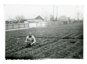 Cuţa planting (c. 1986)