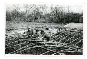 Cuţa, Nicolae & Lenuţa weeding tomato plants in greenhouses