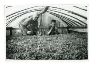 Cuţa & Nicolae transplanting tomato plants