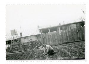 Cuţa planting tomatoes